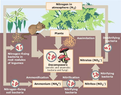 Nitrogen-fixation process