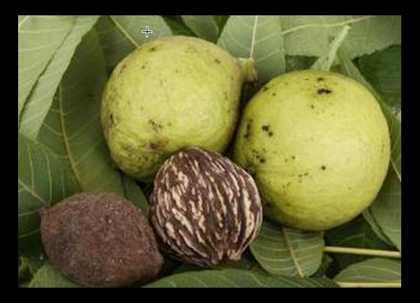 Walnuts husked